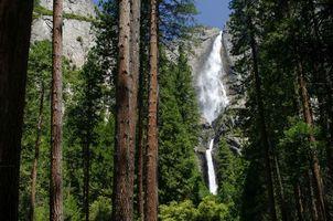 Фото бесплатно водопад, скала, лес