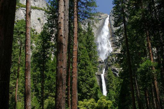 Бесплатные фото водопад,скала,лес,деревья,сосны,природа