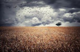 Бесплатные фото поле,дерево,колосья,пейзаж