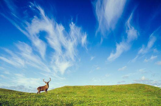 Фото бесплатно олень, небо, холмы