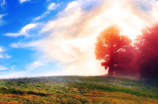Фото бесплатно природа, деревья, утро