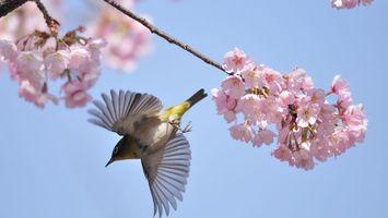 Бесплатные фото птичка,крылья,перья,взлет,дерево,цветет,птицы