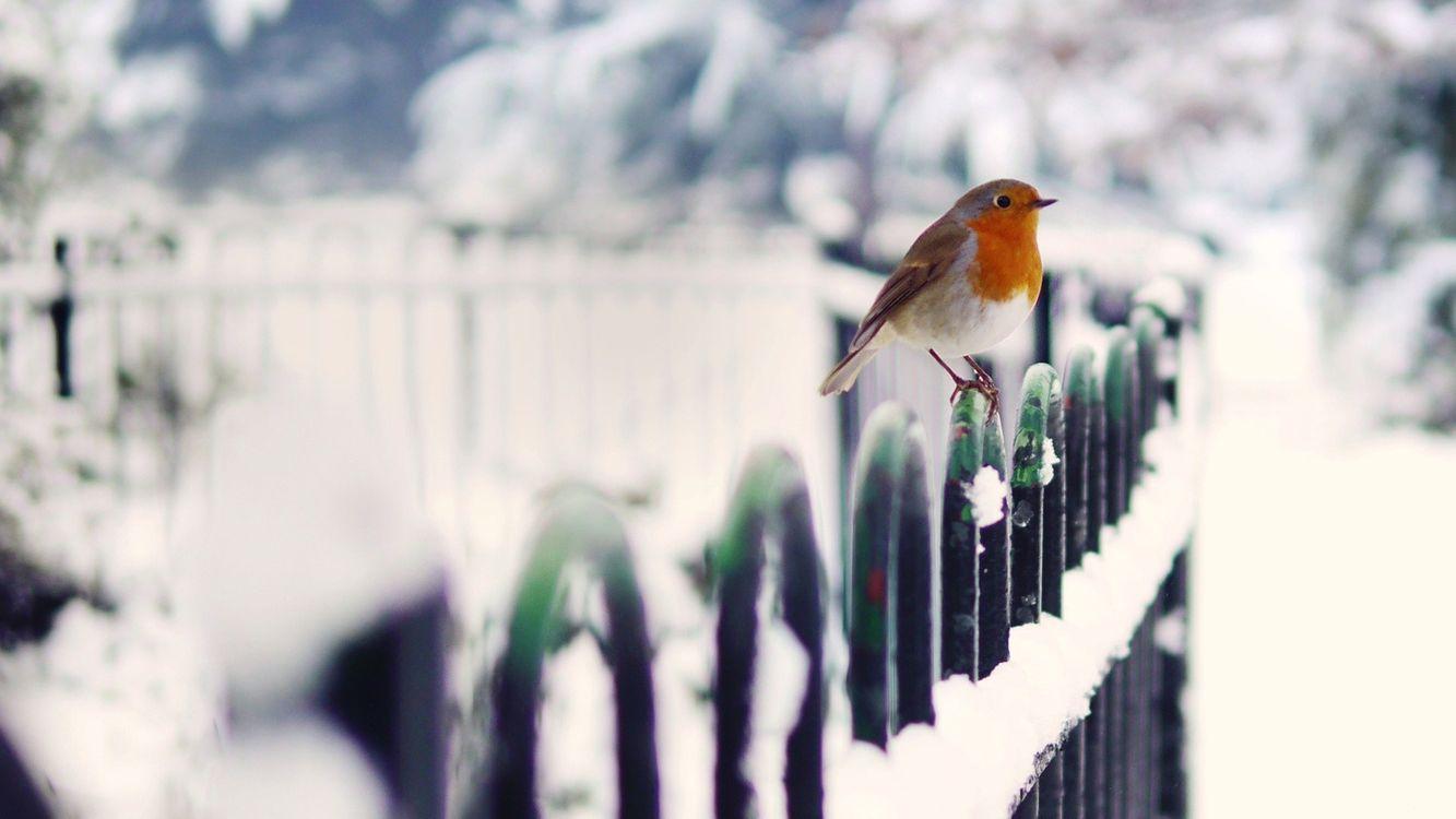 Фото бесплатно птичка, маленькая, забор - на рабочий стол