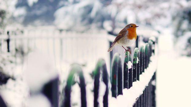 Фото бесплатно птичка, маленькая, забор