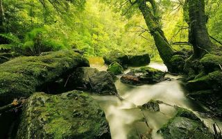Фото бесплатно речей, камни, лес
