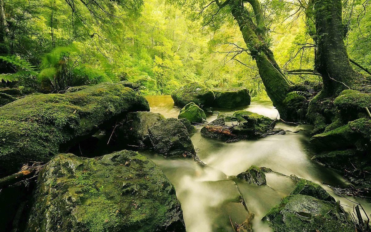 Фото бесплатно речей, камни, лес, деревья, вода, листья, зелень - на рабочий стол