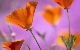 Бесплатные фото цветочки,лепестки,оранжевые,стебли,листья,зеленые,цветы