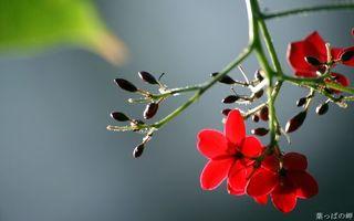 Бесплатные фото цветок,красный,лепестки,бутон,ветка,небо,фон