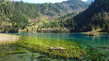 Бесплатные фото вода,река,горы,лес,деревья,небо,природа