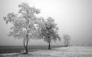 Бесплатные фото зима,поле,трава,деревья,иней,мороз,пейзажи