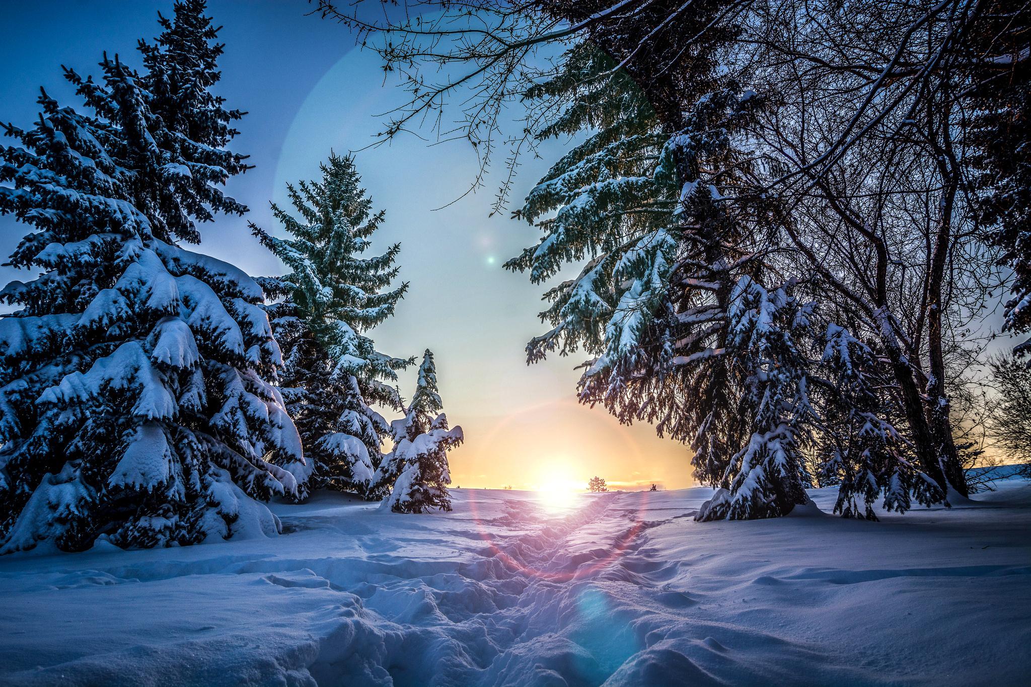 зима, снег, деревья