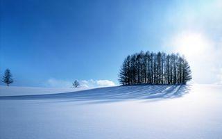 Обои снег, поле, деревья, солнце, чистое небо, пейзажи, природа