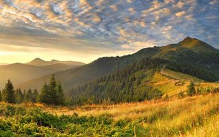 Бесплатные фото холм,горы,возвышенность,деревья,елки,утро,небо