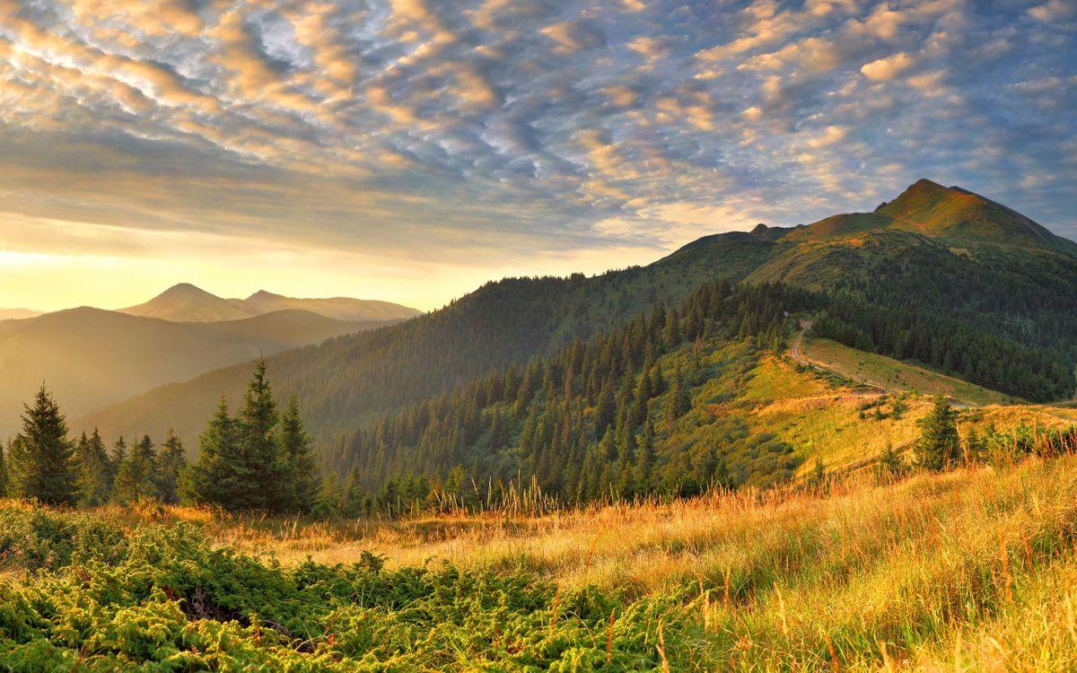 Фото бесплатно холм, горы, возвышенность, деревья, елки, утро, небо, облака, пейзажи, пейзажи