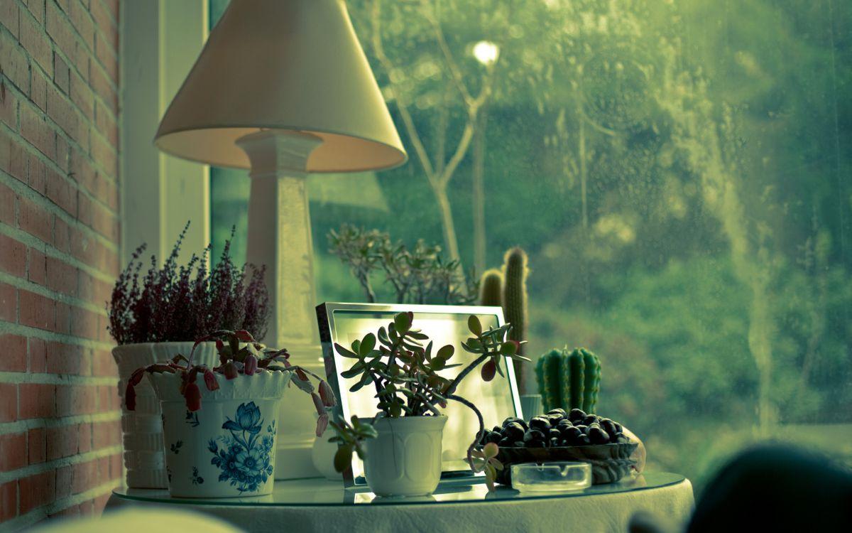 Фото бесплатно столик, лодже, светильник, кактус, растения, фото, рамка, кирпич, окно, разное, разное