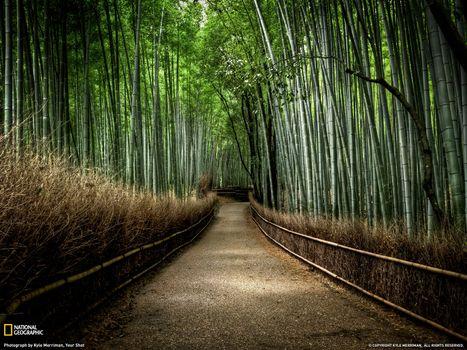 Бесплатные фото тропинка,роща,зелёный,коричневый,national geographic,кусты,столб,ствол. листва,природа