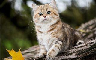Фото бесплатно дерево, бревно, кот
