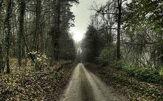 Бесплатные фото деревья,ветви,листва,дорога,небо,осень,пейзажи