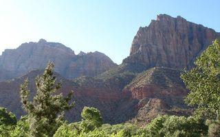 Фото бесплатно горы, деревья, ветки