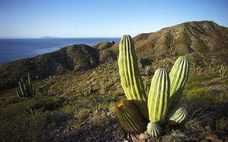 Фото бесплатно кактус, горы, песок