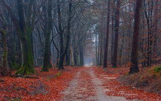Заставки ветвей, путь, плотная
