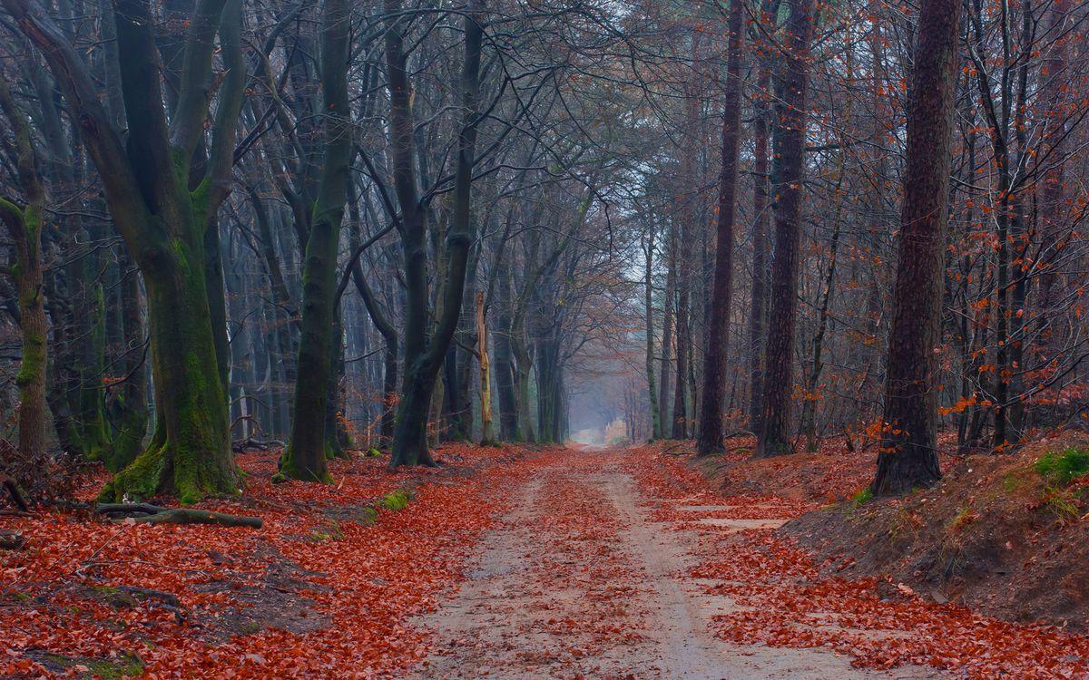 Фото бесплатно ветвей, путь, плотная - на рабочий стол
