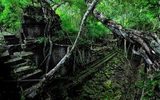 Бесплатные фото лес,старые,деревья,руины,постройка,лианы,природа
