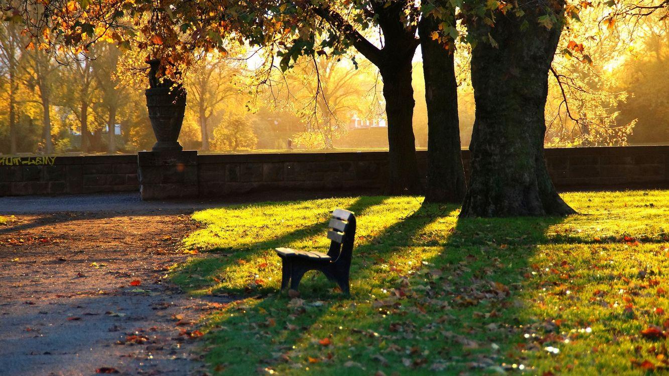Фото бесплатно осень, парк, скамейка - на рабочий стол