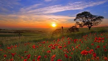 Бесплатные фото поле,маки,красные,трава,дерево,солнце,закат