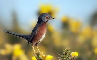 Бесплатные фото птичка,перья,клюв,лапки,глаза,взгляд,цветы