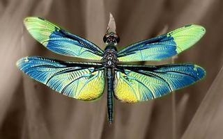 Бесплатные фото стрекоза,крылья,хвост,глаза,насекомое,цвет,лес