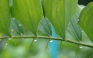 Фото бесплатно ветка, листья, зеленые, дождь, капли, вода, природа