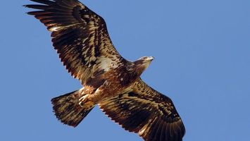 Бесплатные фото ястреб,крылья,клюв,хвост,небо,голубое,птицы