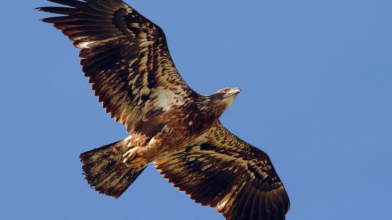 Фото бесплатно ястреб, крылья, клюв - на рабочий стол