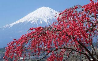Обои вулкан, снег, япония, дерево, листья, город, пейзажи, природа