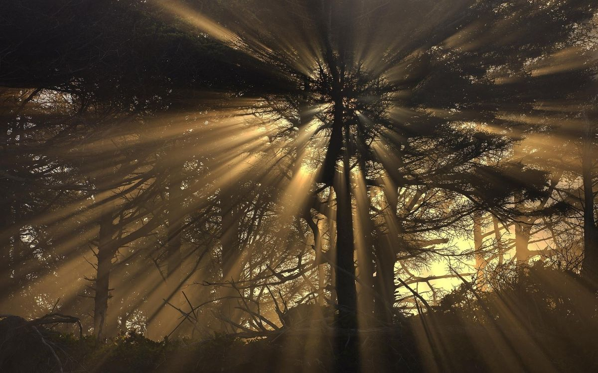 Photos for free forest, fog, sun - to the desktop