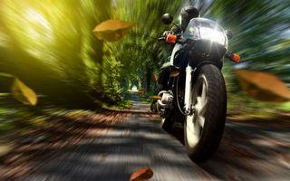 Бесплатные фото байк,мотоциклист,скорость,аллея,деревья,листва,мотоциклы