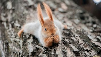 Photo free squirrel, mustache, ears