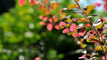 Фото бесплатно дерево, листья, ствол