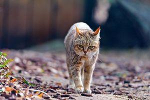 Бесплатные фото кот,походка,серьезный,быкует,разборки,кошки,ситуации