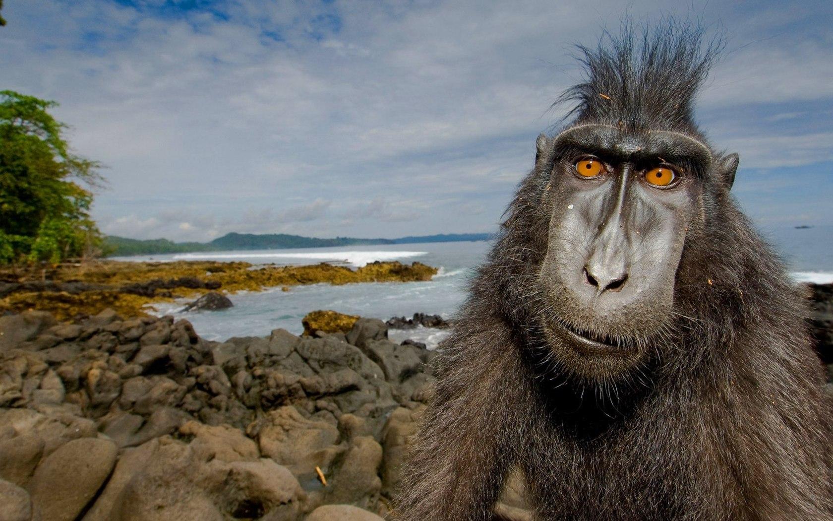 животное, примат, берег