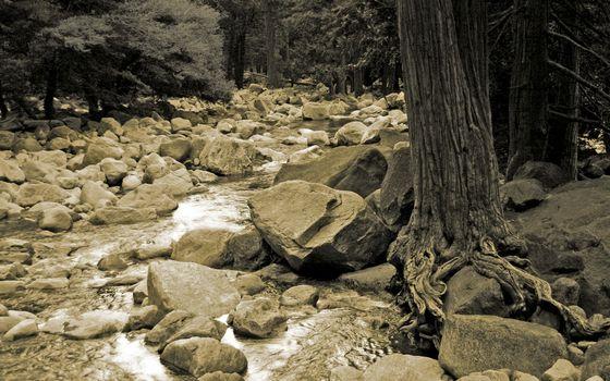 Бесплатные фото камни,вода,лес,деревья,елки,корни,природа