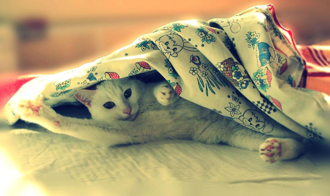 Фото бесплатно кот, белый, пушистый, домашний, лежит, одеяло, лапа, рисунок, принт, глаза, уши, усы, кошки, кошки