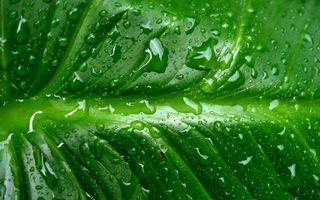 Бесплатные фото лист, зеленый, прожилки, капли, вода, роса