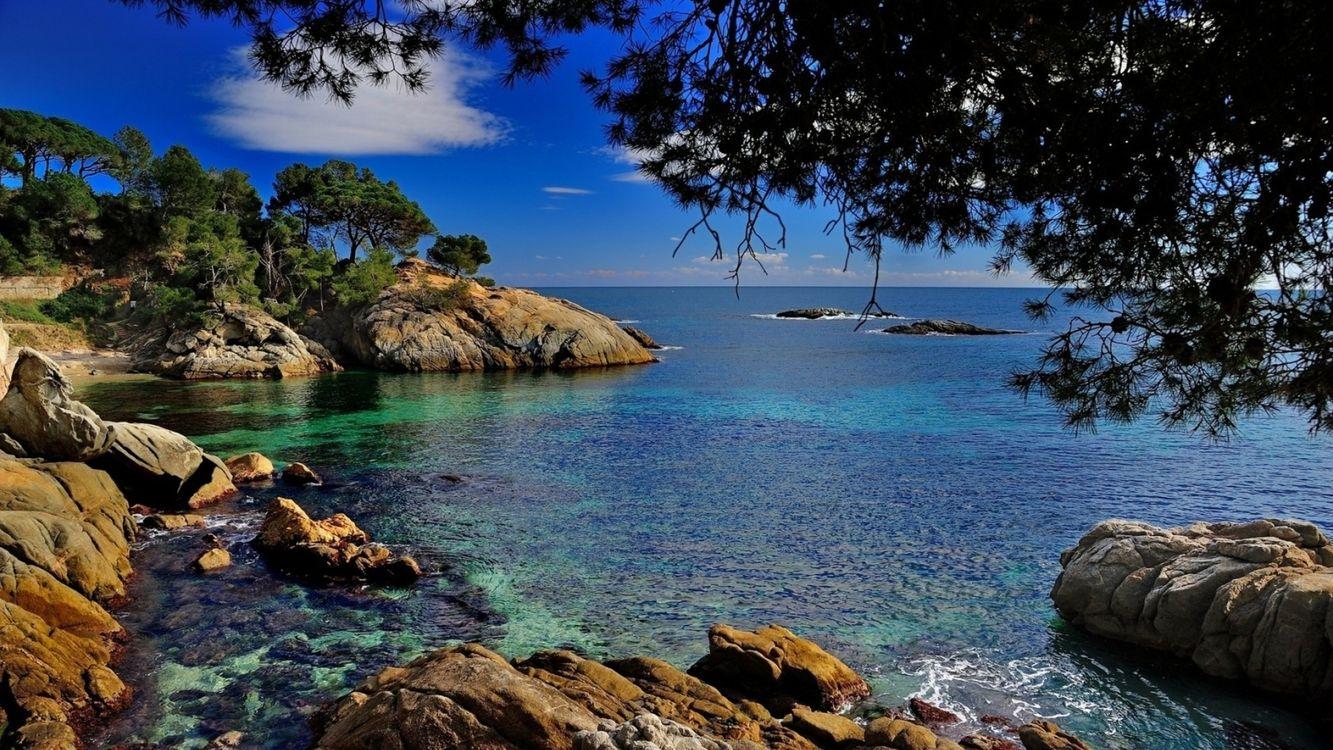 Обои море, океан, вода, горизонт, небо, облака, камни, деревья, ветки, волны, пейзажи на телефон | картинки пейзажи
