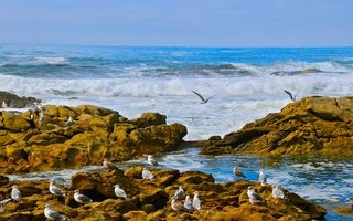 Photo free sea, waves, seagulls