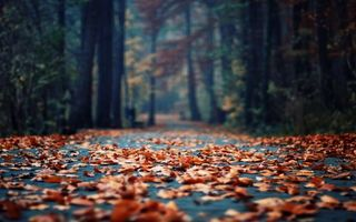 Бесплатные фото осень,листопад,дорожка,парк,деревья,природа