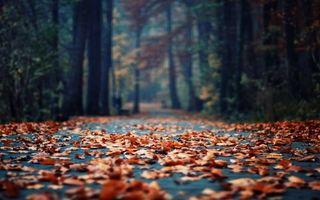 Фото бесплатно осень, листопад, дорожка