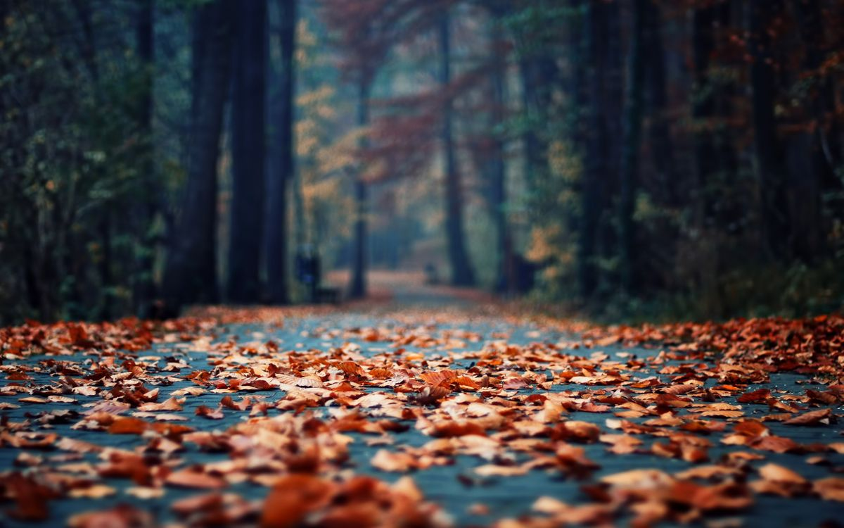 Free photo autumn, leaf fall, path - to desktop