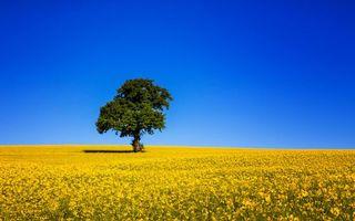 Фото бесплатно желтый, дерево, пейзажи